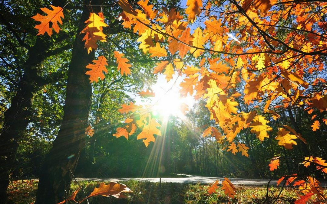 Възстановете силите си и се насладете на есента в Родопите